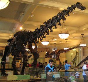 643px-Apatosaurus